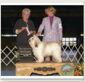 New AKC Champion